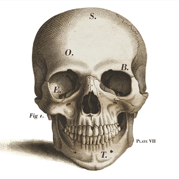 skull - Copy